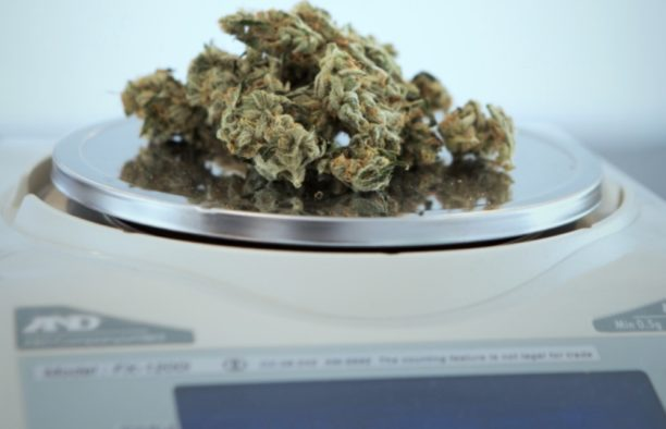 marijuana as medicine on s scale at a provisioning center